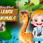 طفل عسلي تعلم الحيوانات